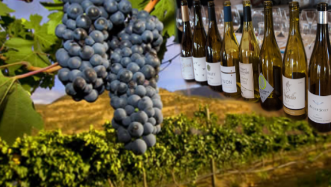 Oregon Wineries are known for their Pinot Noirs